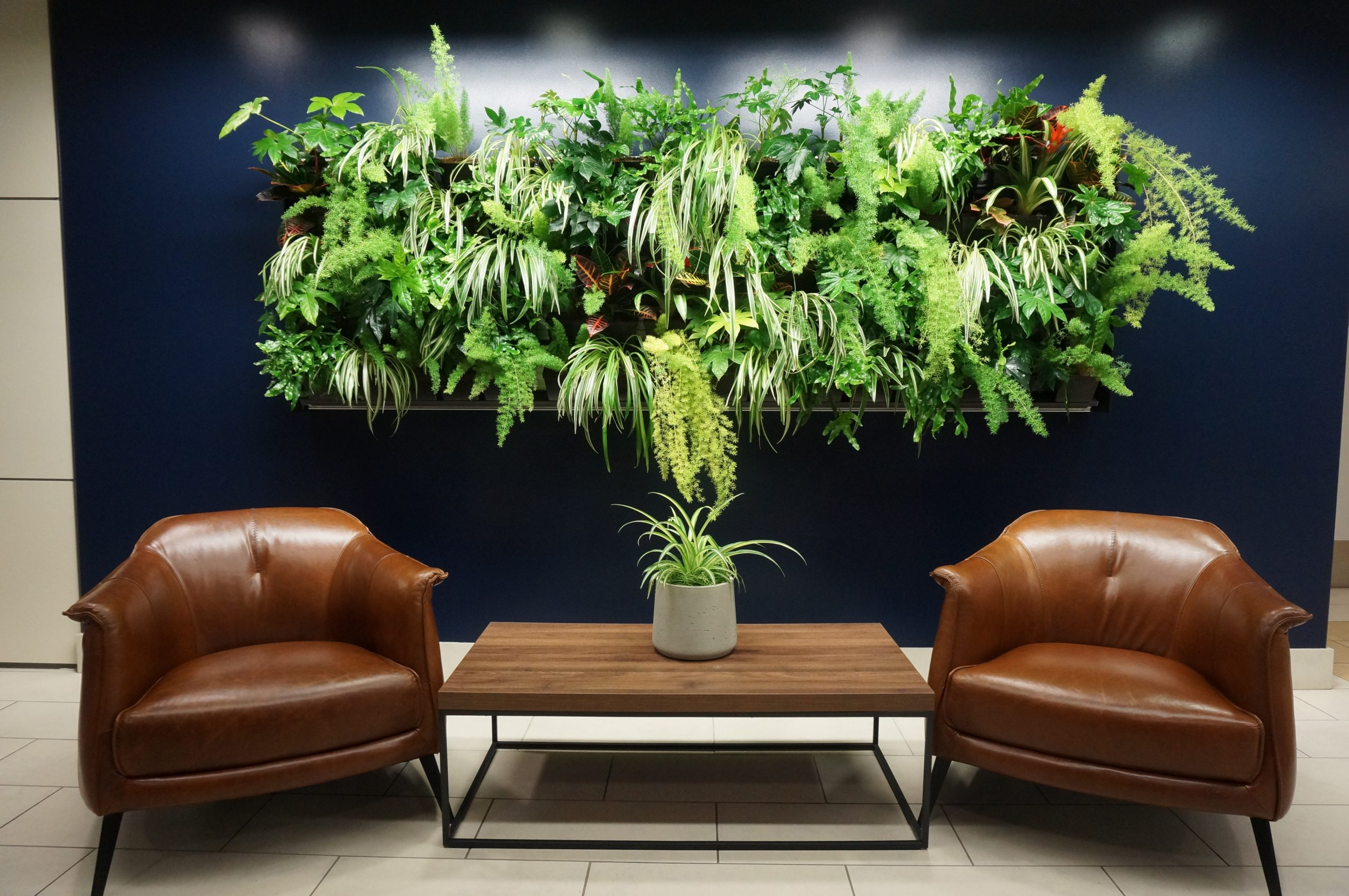A living wall is a great solution to rooms lacking floor space