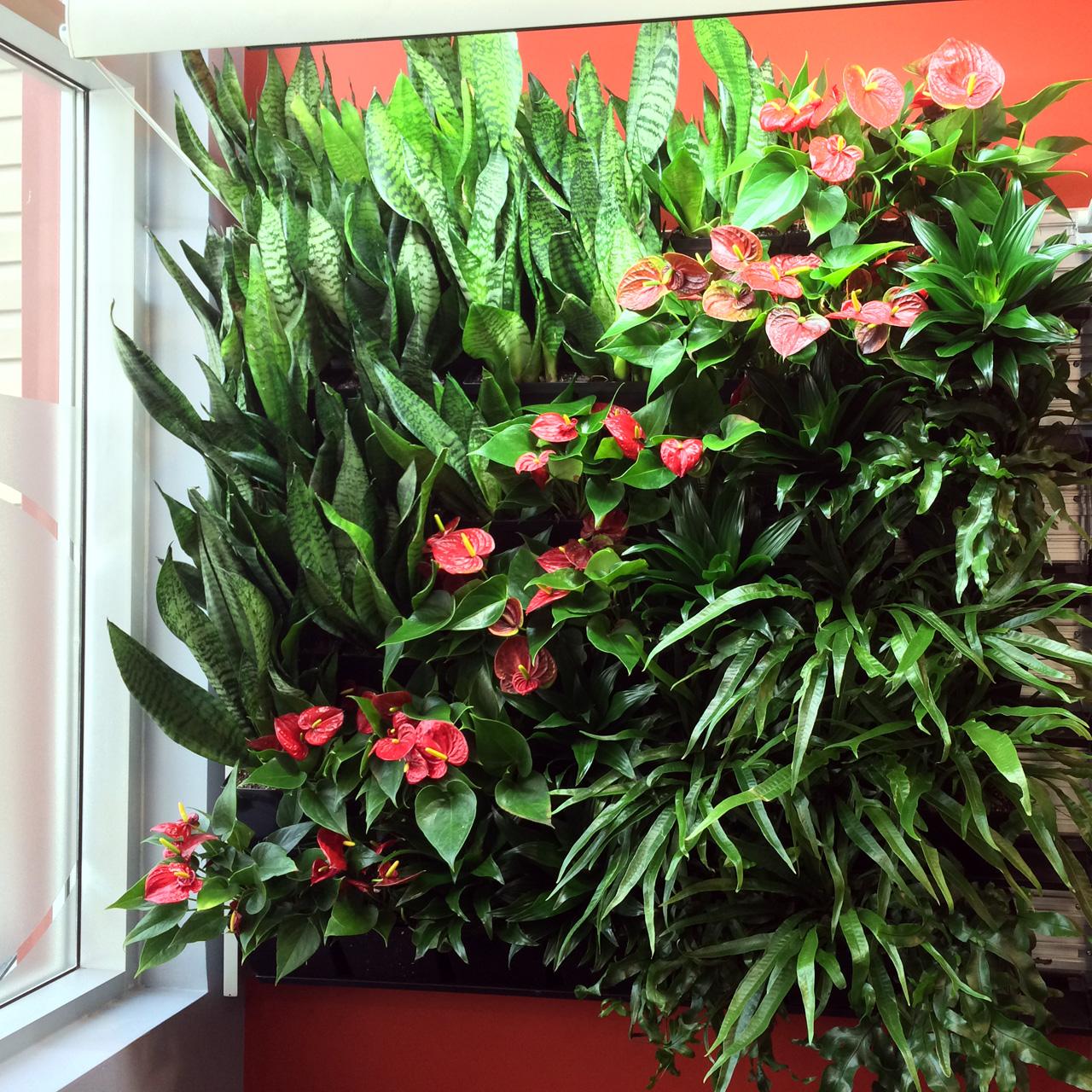 ACSA small living wall May 2015