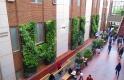 Living Wall at University of Alberta