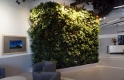 Living Wall downtown YEG