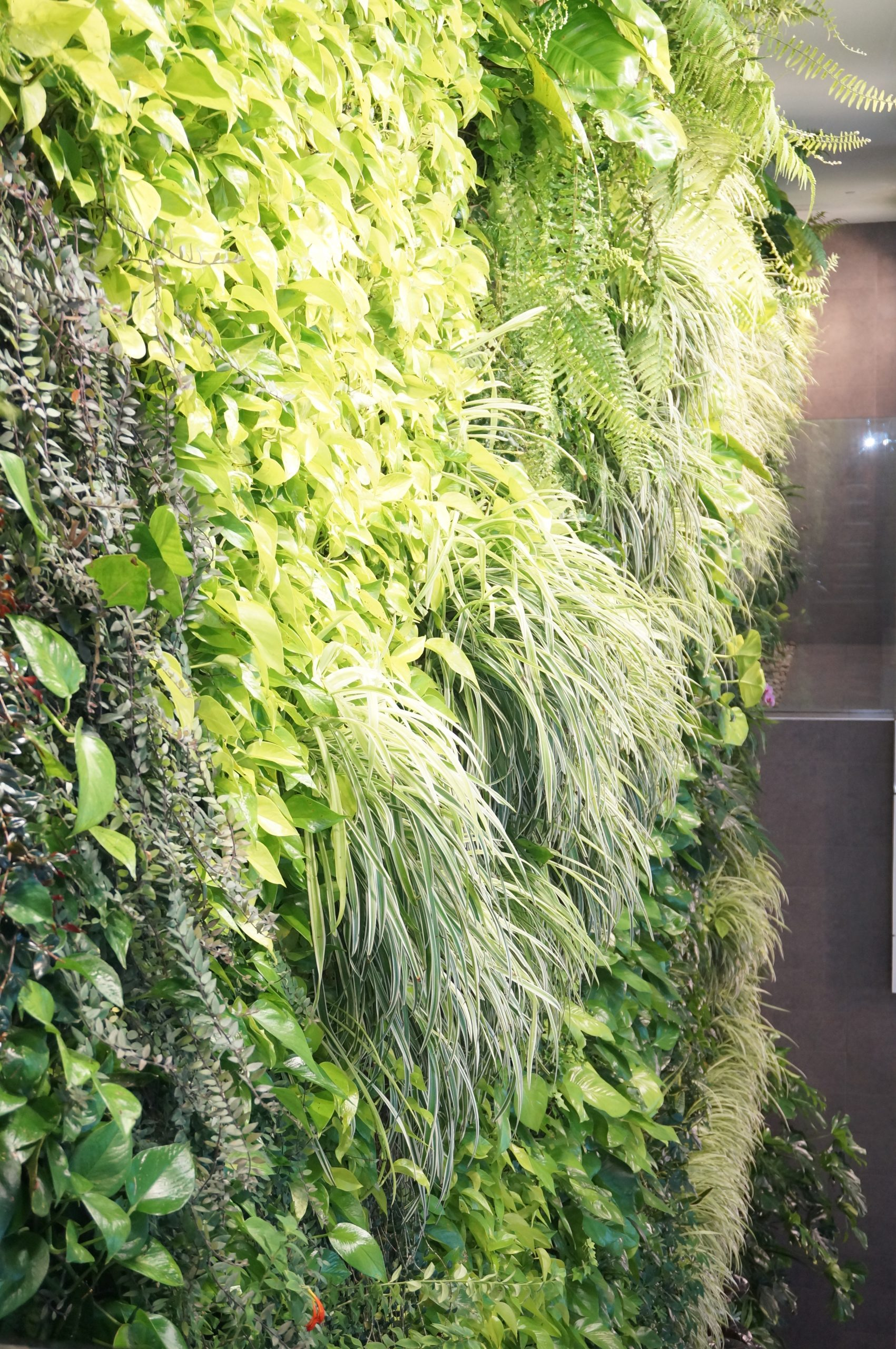 Green Over Grey Living Wall