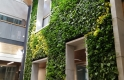 Living Wall and Preserved Moss EPSB