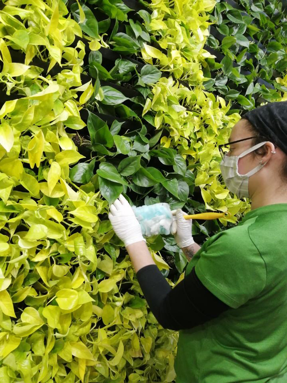 Maintaining living wall