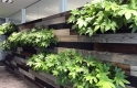 Biophilic Design with plants and wooden feature wall