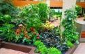 Atrium full of Tropical Foliage