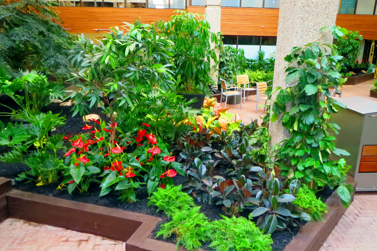 Atrium packed with happy tropical foliage. Anthuriums, ficus elasticas, Schefflera, Buddhist pines, ferns and much more!