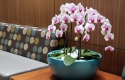 101 St Orchid