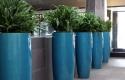 Ferns in Tall Colbalt Blue Planters
