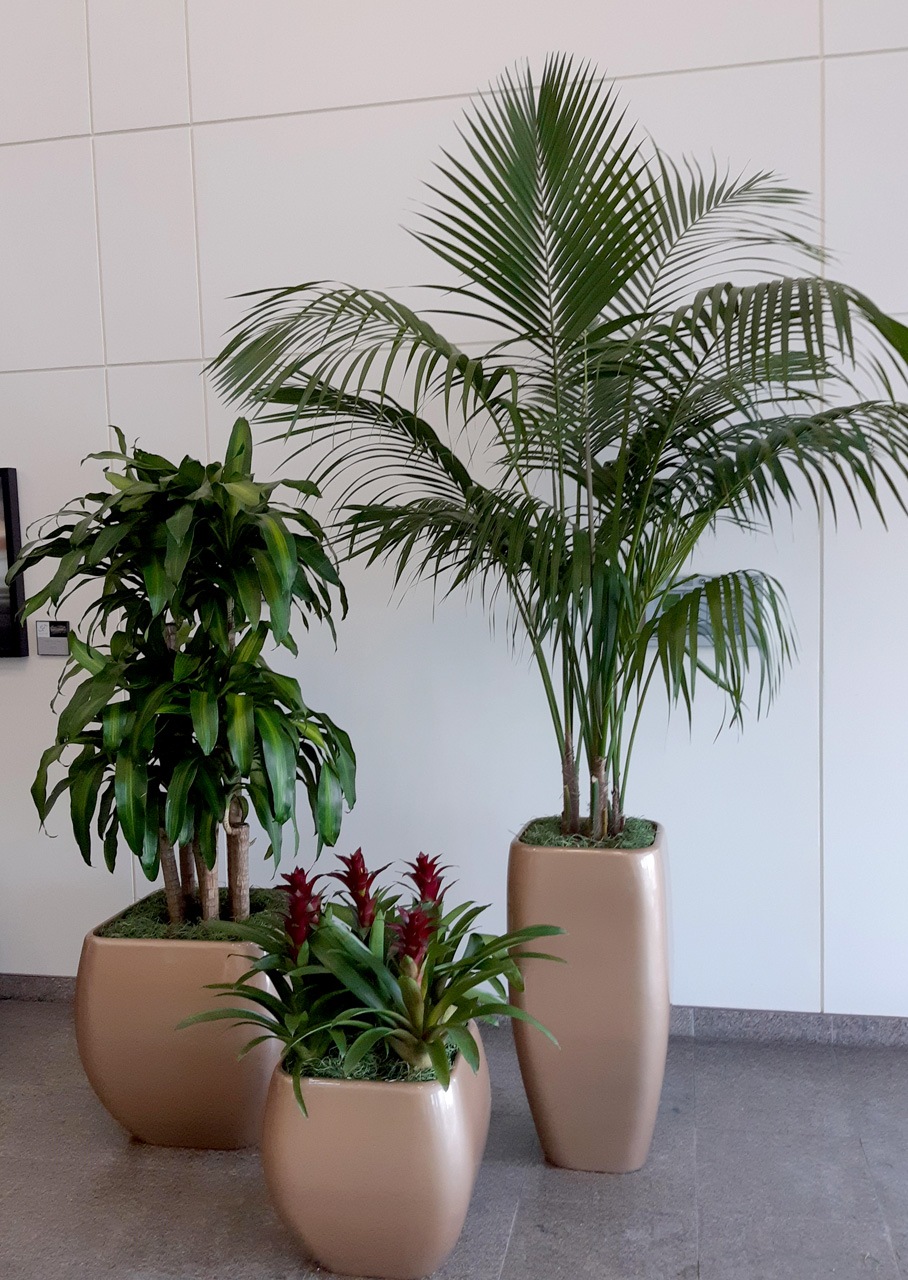 Classic planter styles are kept modern with tropical foliage.