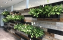 Biophilic Design. Wood paneling with Living wall