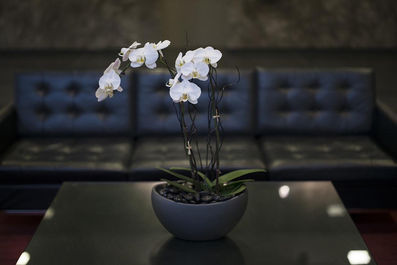 OrchidContrast